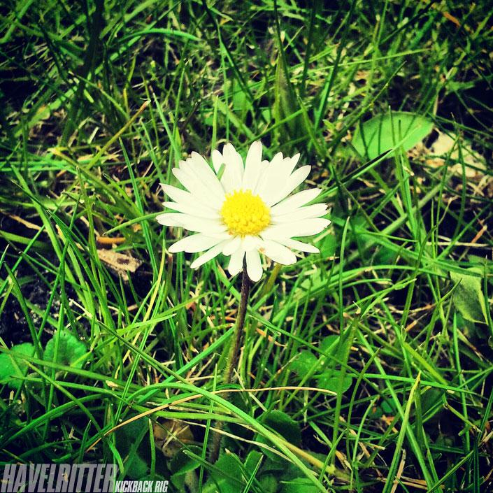 Blumen für Johannes