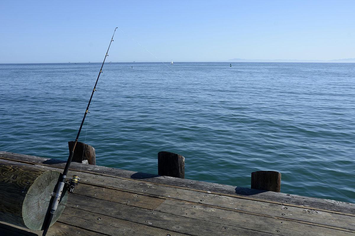 Welche Fische lassen sich vom Wobbler locken? (Foto: Pixaby.com)